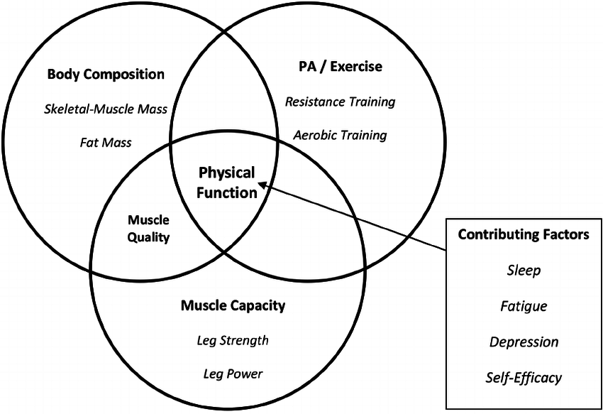 Conceptual model: Factors affecting physical function in