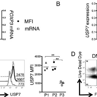 Decreased FOXP3 mRNA and expression of USP7 in P3 Tregs
