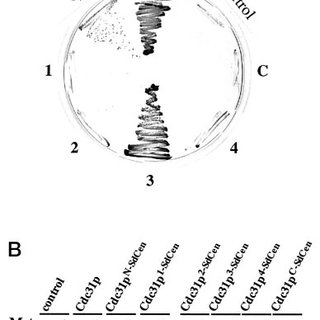 Relative change in apparent molecular mass of ScCaM and