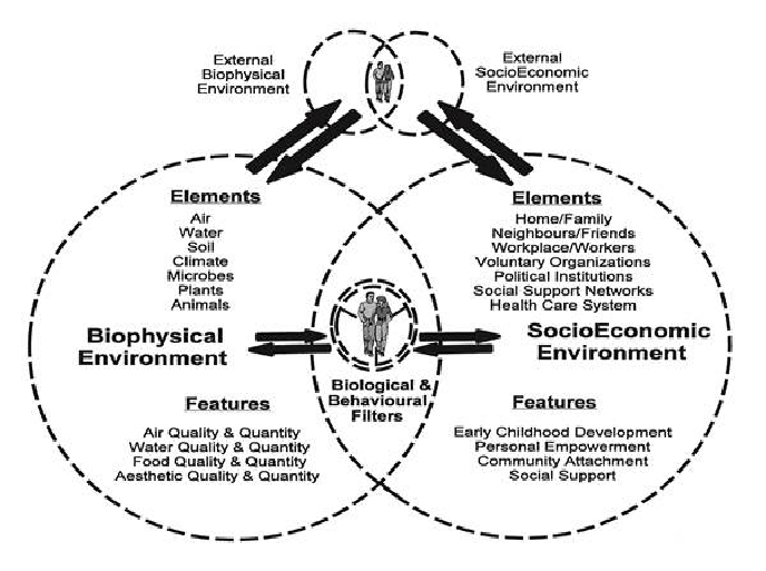 The Butterfly Model of Health (reprinted from [15] with
