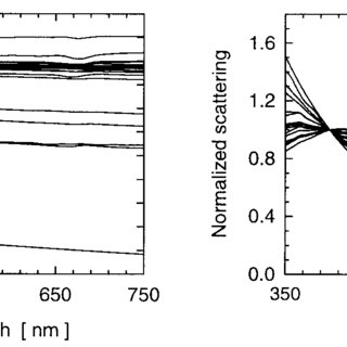 Top Spectra of the total particulate absorption