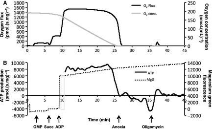 Simultaneous measurement of mitochondrial respiration and