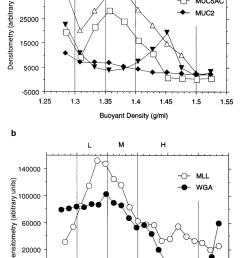 cesium chloride density gradient profiles of human conjunctival extract a dot blots of [ 850 x 1287 Pixel ]