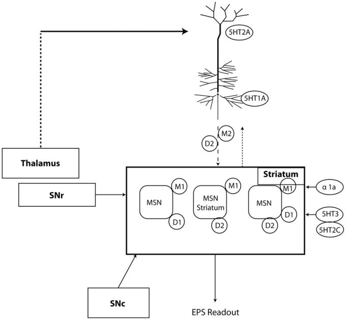 pyramidal motor system