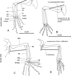 drawing of the skeletal parts exemplifying the determination of the download scientific diagram [ 850 x 990 Pixel ]
