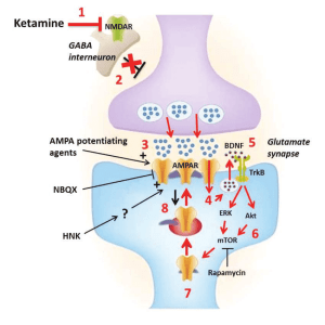 Convergent theory of ketamine's mechanism of action in depression 1) | Download Scientific