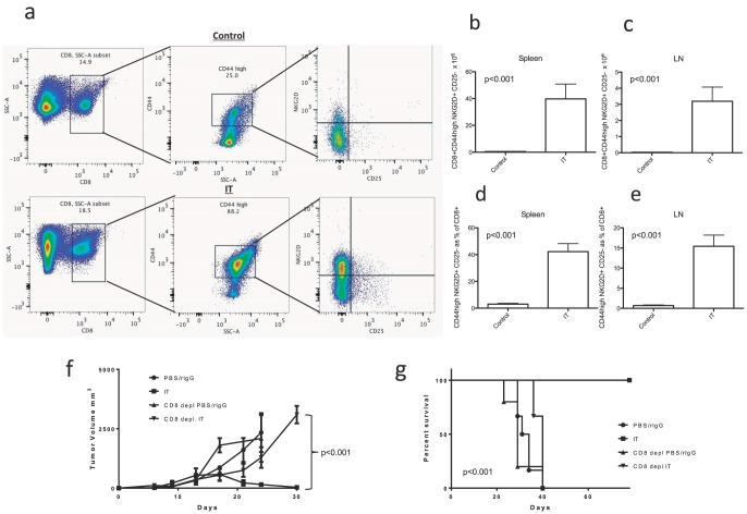 Bystander Activation and Anti-Tumor Effects of CD8+T Cells