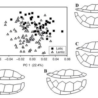 (PDF) Geometric morphometrics in herpetology: Modern tools