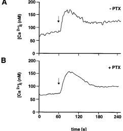 pertussis toxin insensitive increase in the intracellular ca 2 concentration in h69 cells by galanin h69 cells were left untreated a or were pretreated  [ 850 x 936 Pixel ]
