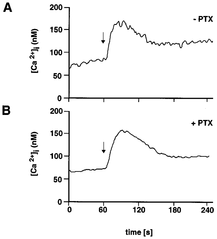 hight resolution of pertussis toxin insensitive increase in the intracellular ca 2 concentration in h69 cells by galanin h69 cells were left untreated a or were pretreated