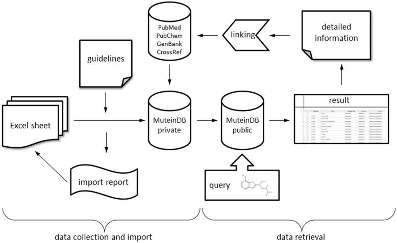 Schematic diagram of database structure. MuteinDB