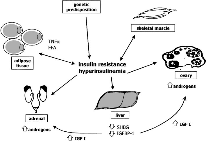 Pathogenesis of insulin resistance and role of