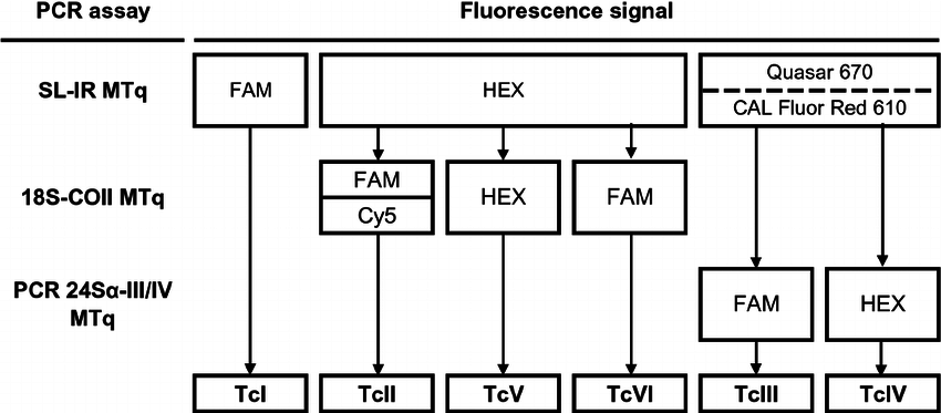 Multiplex real-time PCR flowchart for identification of