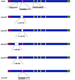 schematic diagram of the different acta derivatives deleted parts are shown in [ 850 x 1023 Pixel ]