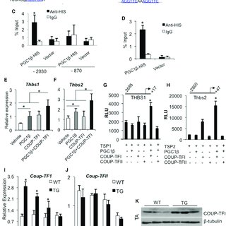 Regulation of Angiogenic Gene Expression by PGC1β