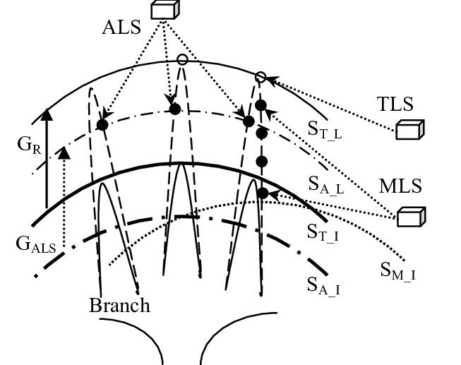 Schematic relationships between the measurements of tree