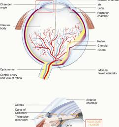 anatomy of the human eye and aqueous humor pathway  [ 848 x 1109 Pixel ]