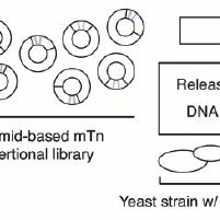 (PDF) Mutant power: Using mutant allele collections for