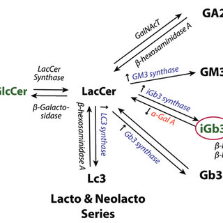 GSL synthetic pathways. Accumulation of GlcCer (48) and