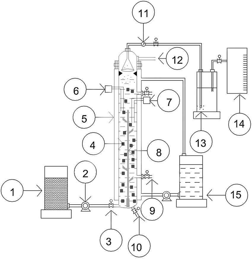 Schematic description of PEG immobilized cells containing