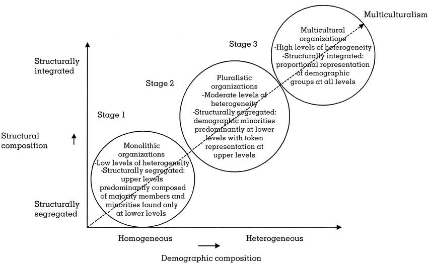 A Three-Stage Model of Organizational Demography