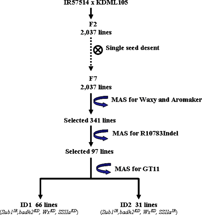 Breeding and selection scheme using step-wise marker