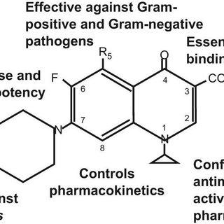 Mechanism of Action of Fluoroquinolones Structuralactivity