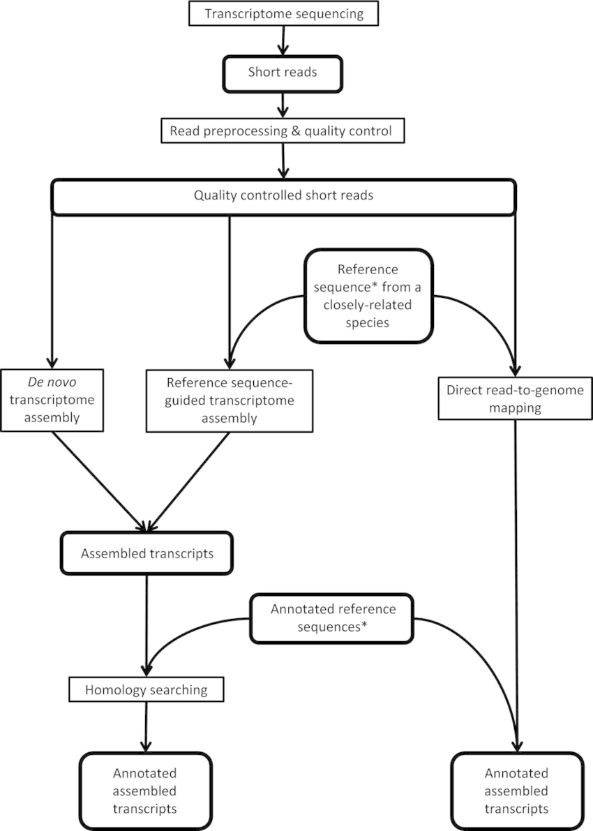 Flow chart outlining pipelines for transcriptome