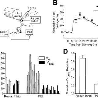 PTX decreases shunting of test currents by the root-evoked