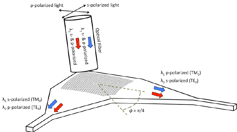 Schematic illustration of the bi-wavelength polarization
