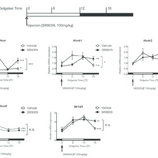 (PDF) Pharmacological and Genetic Modulation of REV-ERB