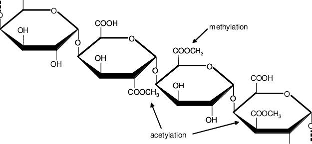 The basic chemical structure of pectins. Pectins are