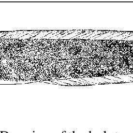 (PDF) NEW ZOARCID FISH SPECIES FROM DEEP-SEA HYDROTHERMAL