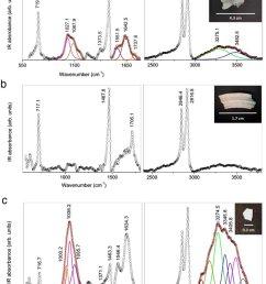 characterization of marine litter internalised by jellyfish atr ftir download scientific diagram [ 850 x 1108 Pixel ]