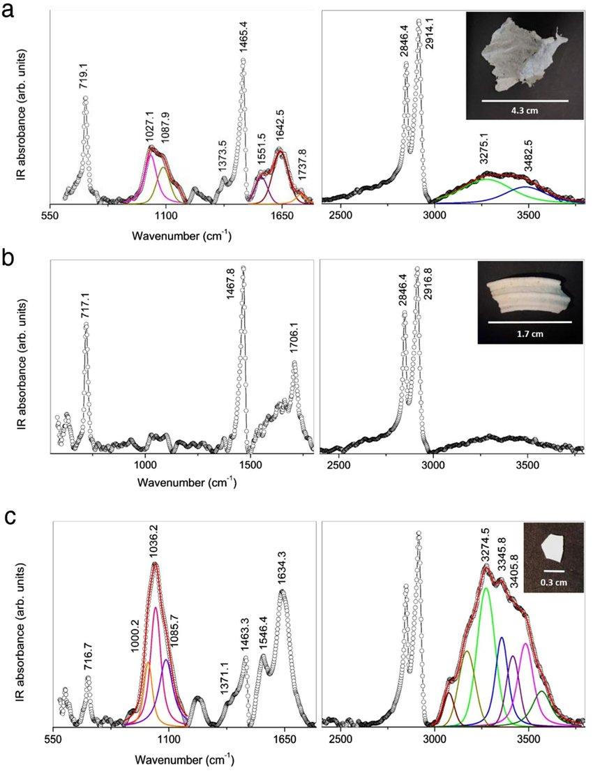 medium resolution of characterization of marine litter internalised by jellyfish atr ftir download scientific diagram