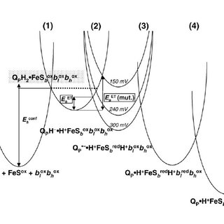 Schematic presentation of electron and proton transfer