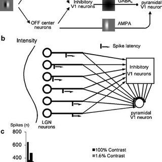 Spike latency of the first spike of the V1 neuron model as