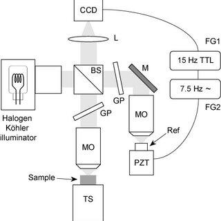 Ex vivo full-field OCT imaging of the anterior segment of