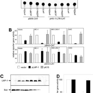 Bax is required for the antiapoptotic activity of LMP-1