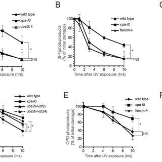 (A–F) Clonogenic survival assays to assess viability of