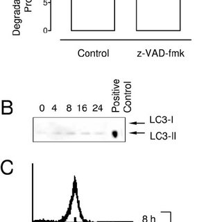 Effect of RIP1 expression on z-VAD-fmk-induced cell death