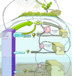 the oceanic carbon cycle pools of carbon are expressed in pmol c fluxes [ 850 x 1115 Pixel ]