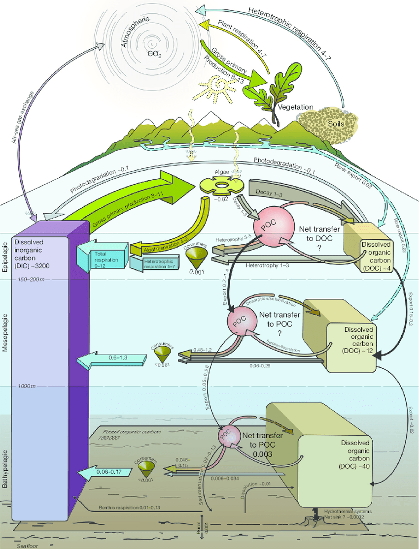 medium resolution of the oceanic carbon cycle pools of carbon are expressed in pmol c fluxes