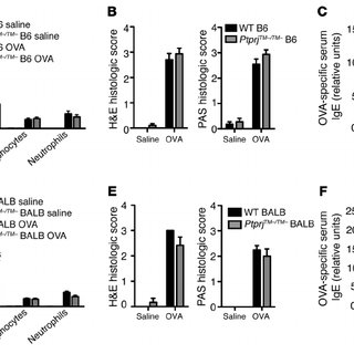 Overexpression of LAR blocks adipocyte differentiation of