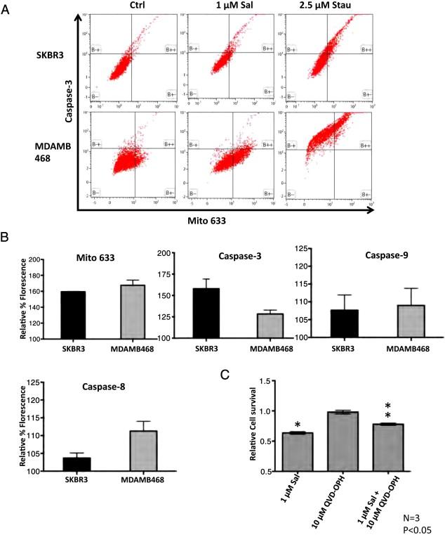 Salinomycin induces activation of autophagy, mitophagy and