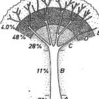 (PDF) Ecología de las plantas epifitas