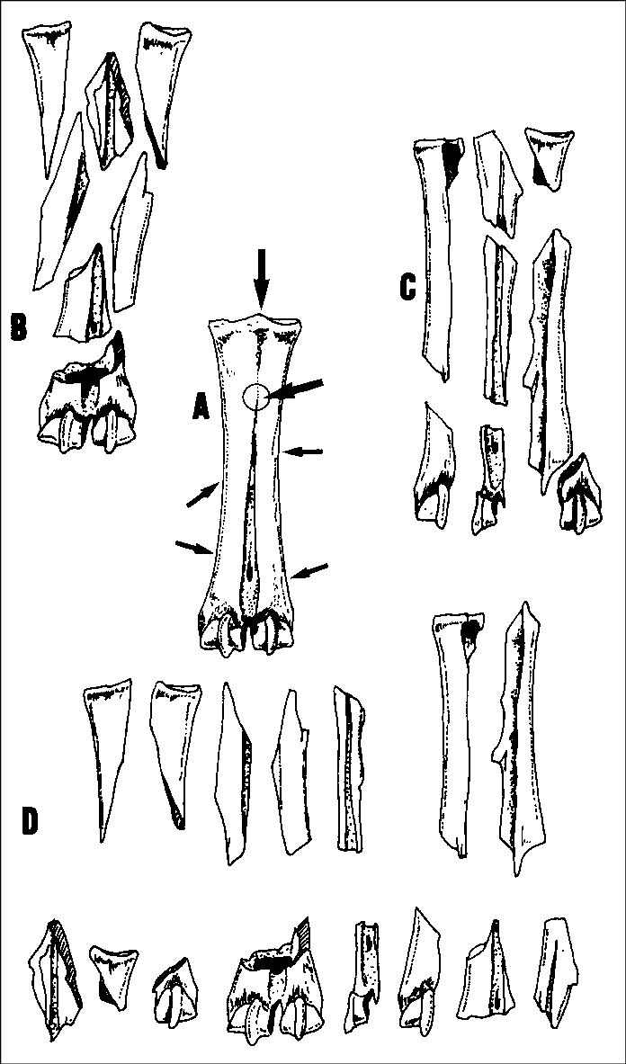 hight resolution of fracturation patterns of cattle metatarsals from gorny a complete bone with indication
