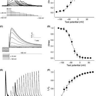 (PDF) Voltage‐dependent potassium currents expressed in