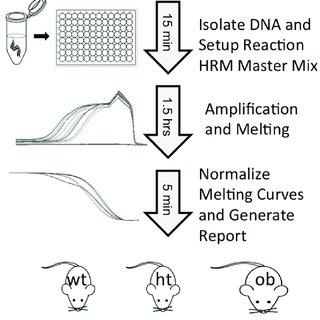 (PDF) Efficient Method of Genotyping Ob/Ob Mice Using High