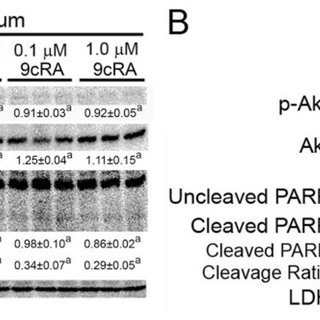 Role of PPARβ/δ in the modulation of gene expression by